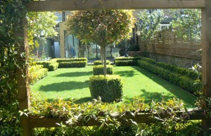 Clipped Photinia trees with cubes of Buxus